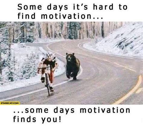 Some Find Some Days It S To Find Motivation Some Days Motivation Finds You Starecat