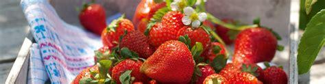 Lagerung Erdbeeren by Erdbeeren Pfl 252 Cken Und Lagern K 252 Cheng 246 Tter