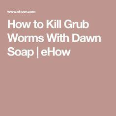 how to kill grubs naturally how to kill grub worms with soap grubs worms and soaps