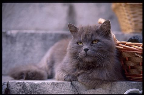 types of cats different types of cats pictures