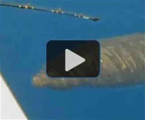 fishing boat attacked by shark megalodon shark attacks boat off australia coast upi