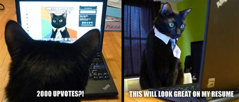 Cat Laptop Meme - irti funny picture 3973 tags business cat upvotes