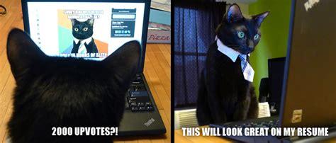 Cat Laptop Meme - image 516994 business cat know your meme