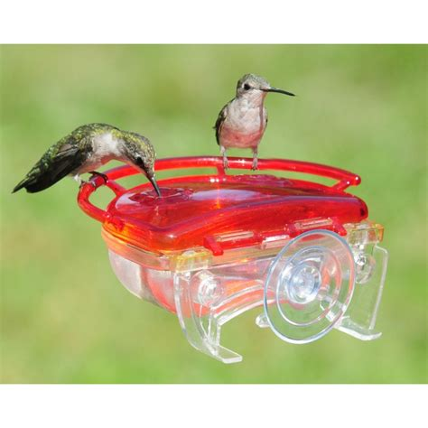 little gem window hummingbird feeder