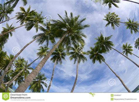 tropical palm trees tropical palm trees royalty free stock photography image
