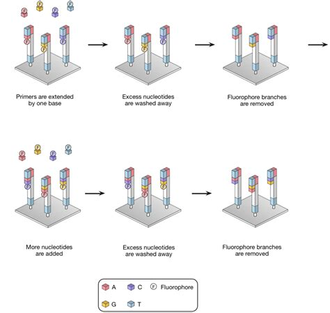 sequencing illumina next generation sequencing
