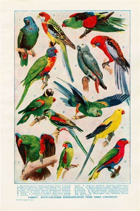 printable bird poster 17 best images about parrot beauties on pinterest