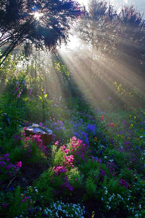 beaming flowers picture beautiful flower in bloom light soft warm rays of beaming through the trees