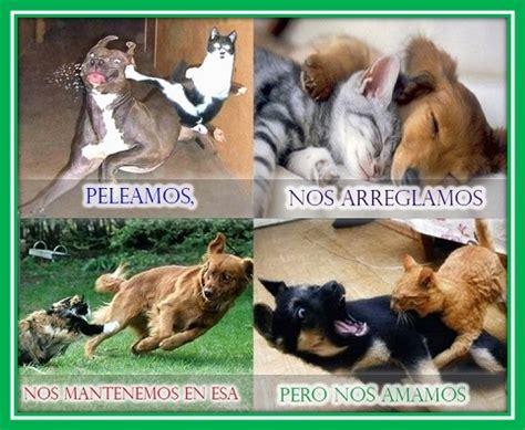 imagenes de animales graciosos para facebook fotos de perritos graciosos para descargar imagenes