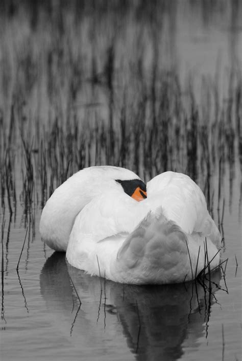 Pixelistes • Noir et blanc avec détail en couleur : Mes