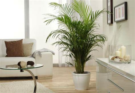 palmenarten zimmerpflanzen palmenarten zimmerpflanzen wirken sehr sch 246 n archzine net