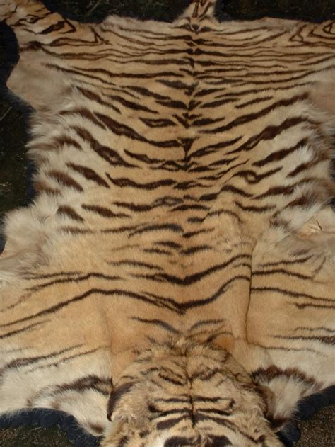 tiger skin rug with vintage tiger skin rug at 1stdibs