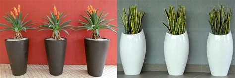 botanica pots planters  water features south africa