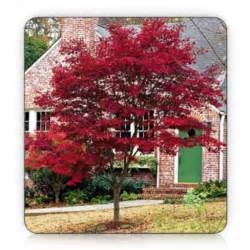 landscaping landscaping ideas good front yard trees