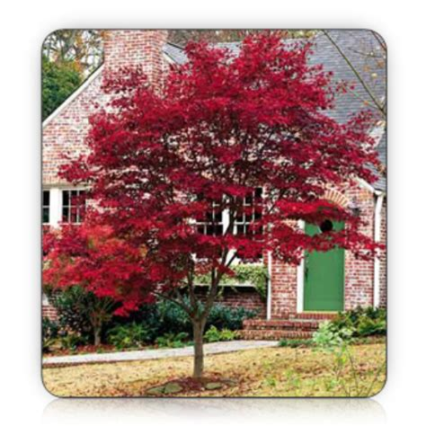 good trees for small backyards landscaping landscaping ideas good front yard trees