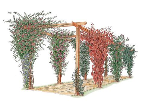 climbing plants for pergolas how to choose and maintain climbing plants diy garden