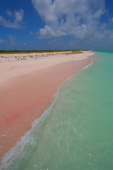 beaches with pink sand barbuda pink beach travels pinterest