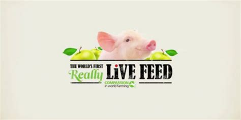 Feeder Live What Works And Why Best Caigns Of The World Rso