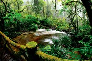 beautiful rainforest wall mural eazywallz rainforest wall mural the alley exchange