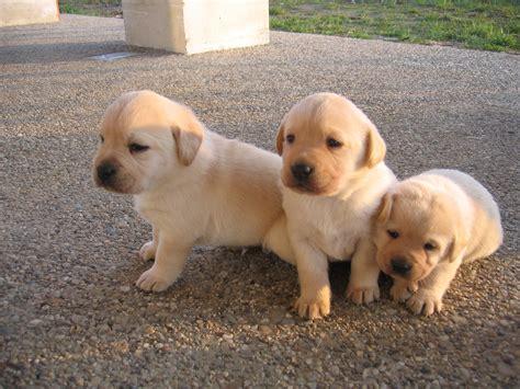 canile pavia cuccioli regalo i cagnolini di marigliano ricevono 6 000 da vittoria