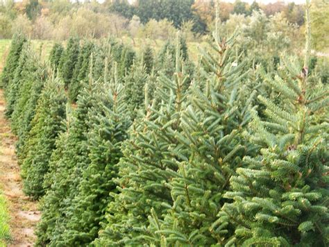 8 christmas tree farms near national harbor the