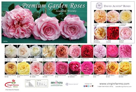 1000 images about virgin farms garden roses on pinterest