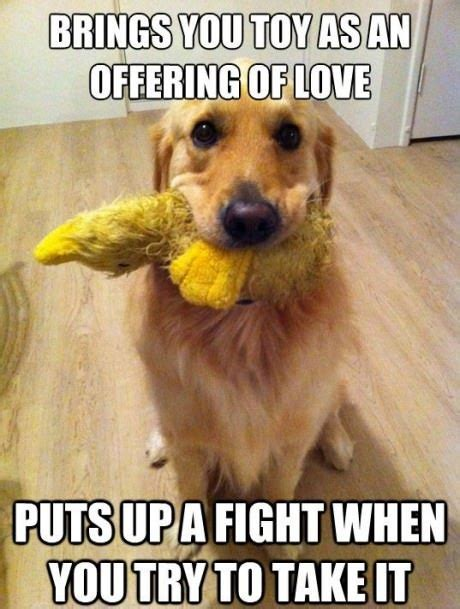 Cute Love Meme - do you like this funny dog meme brings you toys as an