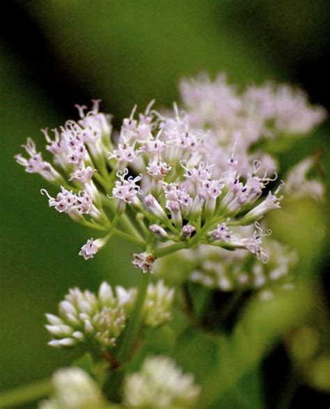 fragrant plants florida 238 best images about fragrant flowers for south