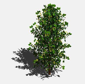 maple leaf shrub  dwg model  autocad designs cad