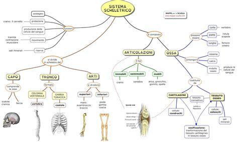 test di anatomia immagini apparato scheletrico