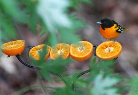 bird feeding 101