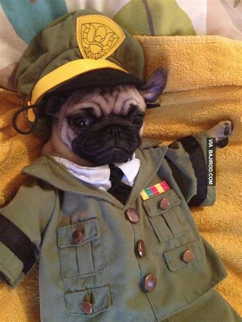 pug army pug in army 26 pugs in costumes pug page for our sweet pug
