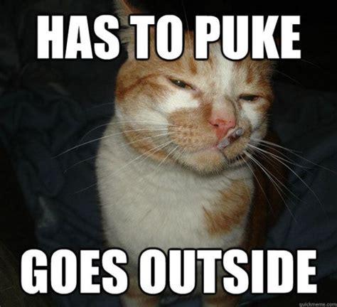 No Butt Meme - no pain in the butt cat memes 20 pics