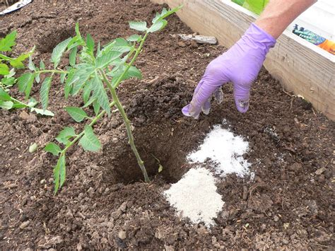 Epsom Salt For Gardening by 15 Amazing Uses Of Epsom Salt Why It Should Be In Every