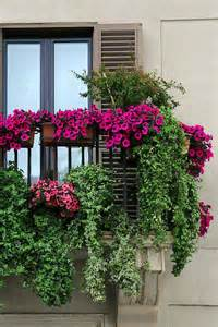 Apartment Plants And Flowers Best 25 Balcony Flowers Ideas On Small