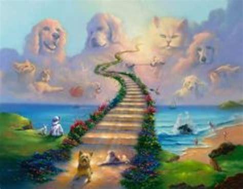 rainbow bridge for dogs the rainbow bridge