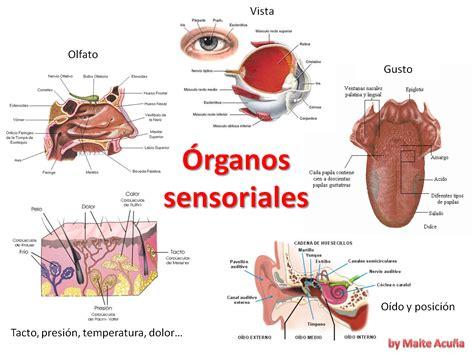 Imagenes De Organos Sensoriales | ihmc public cmaps