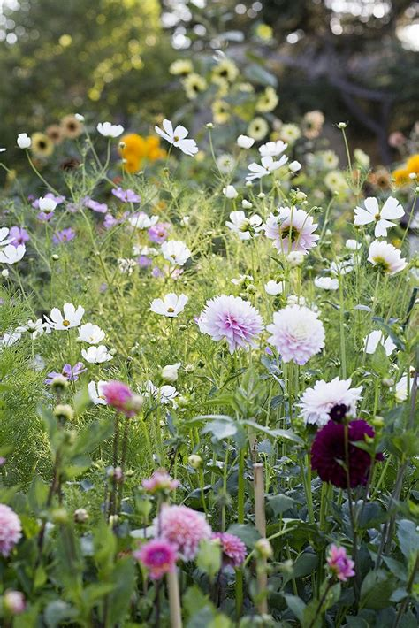 cut flower gardens best 20 cut flower garden ideas on