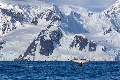 things to do on 11 of the best things to do in antarctica the planet d