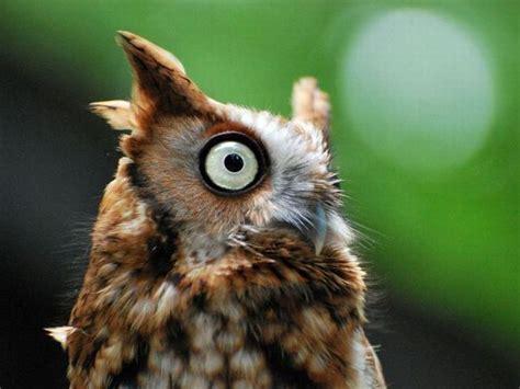 Happy Owl Top happy owl