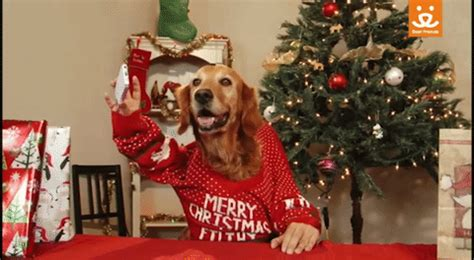 best status gif on christmas save them all merry gif by best friends animal society find on giphy
