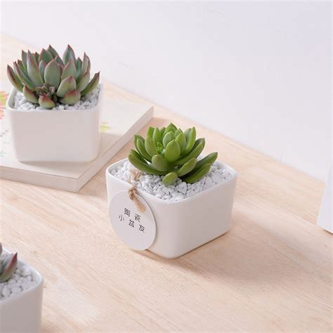 Decorative Plant Pots by Popular Small White Plant Pots Buy Cheap Small White Plant