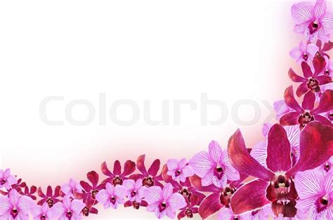 Wallpaper Design Home Decoration by Purple Orchid Flowers Border Design Stock Photo