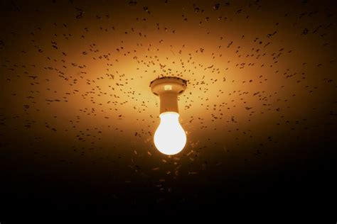 Are Bees Attracted To Light by Get Rid Of Flying Insects Attracted To Lights In Your Home