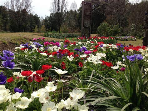 Cut Flower Garden Moore Farms Botanical Garden Flowers For A Cutting Garden
