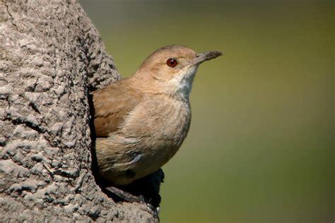 versos cortos de aves versos cortos de aves newhairstylesformen2014 com
