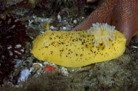 Lemon And The Sea How - monterey scuba board sea lemon