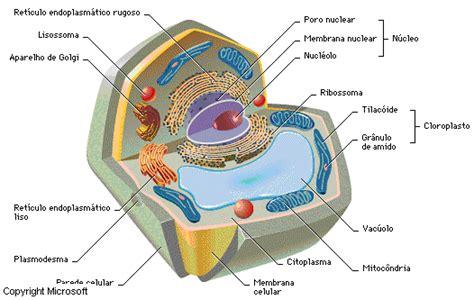 fotos de celulas animais c 233 lula biologia grupo escolar