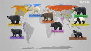 For this first article we chose the asian black bear ursus thibetanus