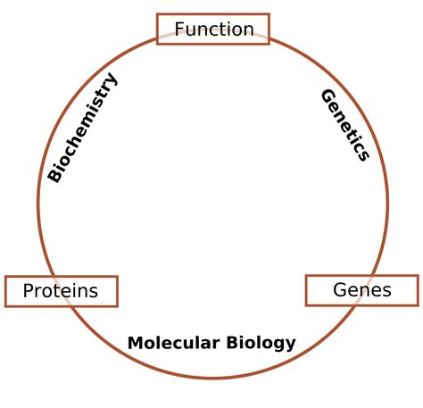definition of biography wikipedia molecular biology simple english wikipedia the free